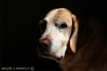 17_old-faithful-friend-ii.jpg
