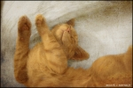 17_sleeping-cat-baby-e.jpg